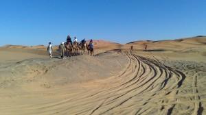 dune-con-camellos
